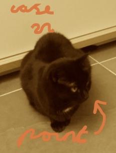 labelled cat