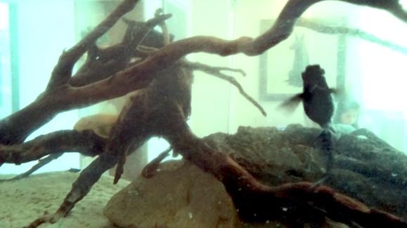 fishprey